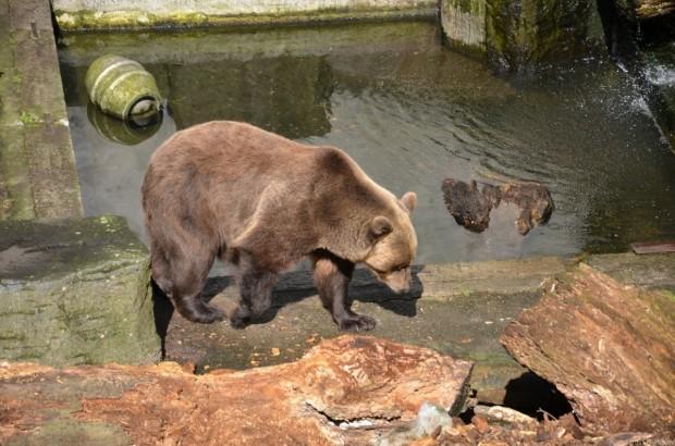 Мишка в медведевых ямах
