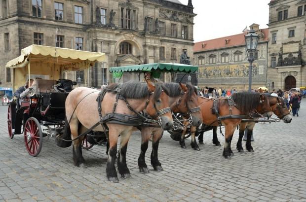 Лошади на Замковой площади