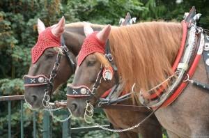 Запряженные лошадки